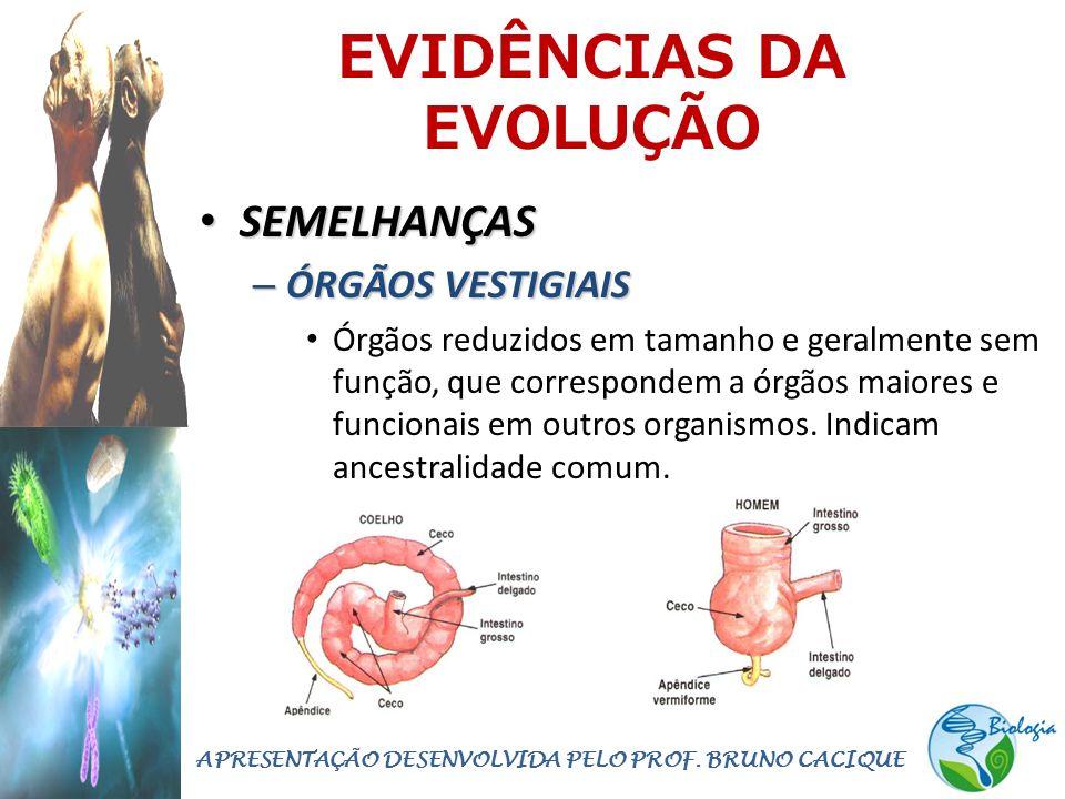 EVIDÊNCIAS DA EVOLUÇÃO • SEMELHANÇAS – ÓRGÃOS VESTIGIAIS • Órgãos reduzidos em tamanho e geralmente sem função, que correspondem a órgãos maiores e funcionais em outros organismos.
