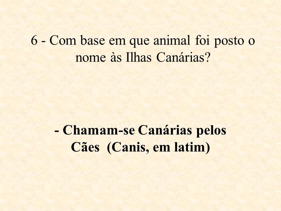 5 - De que são feitos os pincéis de pêlo de camelo? - Na realidade não é pêlo de Camelo, mas sim pêlo de Esquilo.