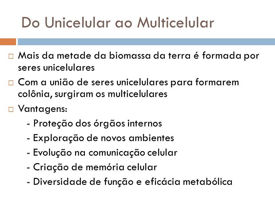 Do Unicelular ao Multicelular  Mais da metade da biomassa da terra é formada por seres unicelulares  Com a união de seres unicelulares para formarem