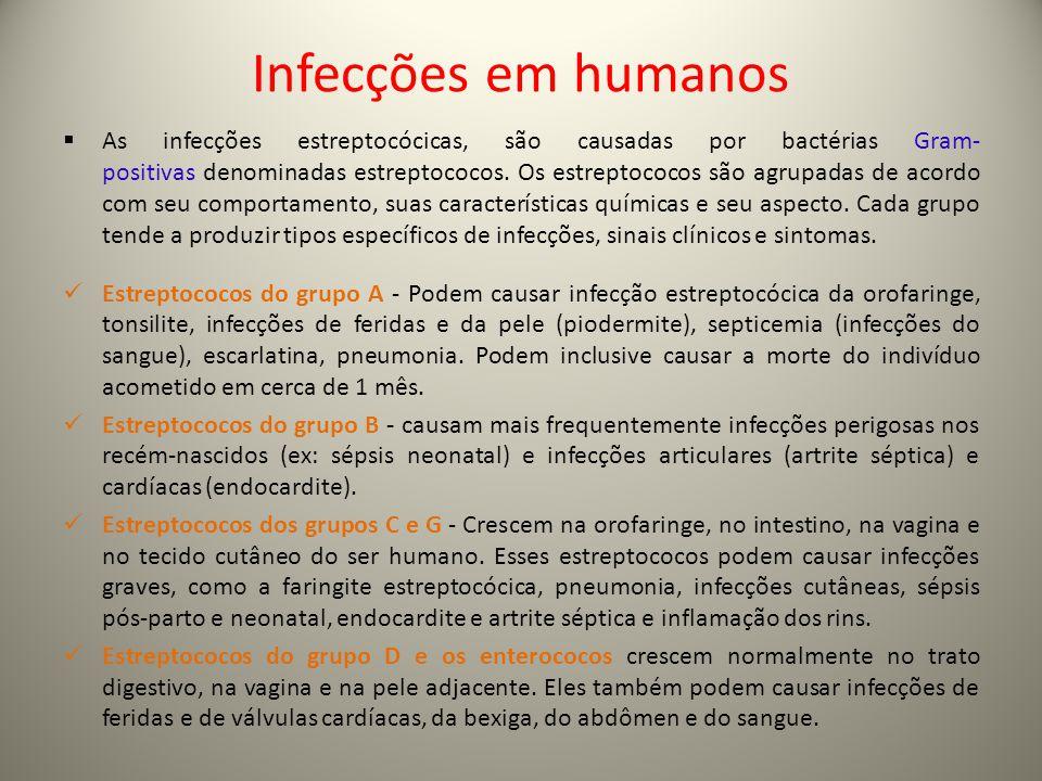 Infecções em humanos  As infecções estreptocócicas, são causadas por bactérias Gram- positivas denominadas estreptococos. Os estreptococos são agrupa