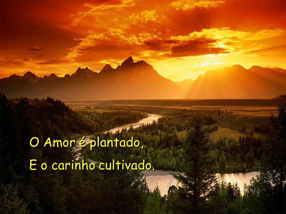 O Amor é plantado, E o carinho cultivado. O Amor é plantado, E o carinho cultivado.