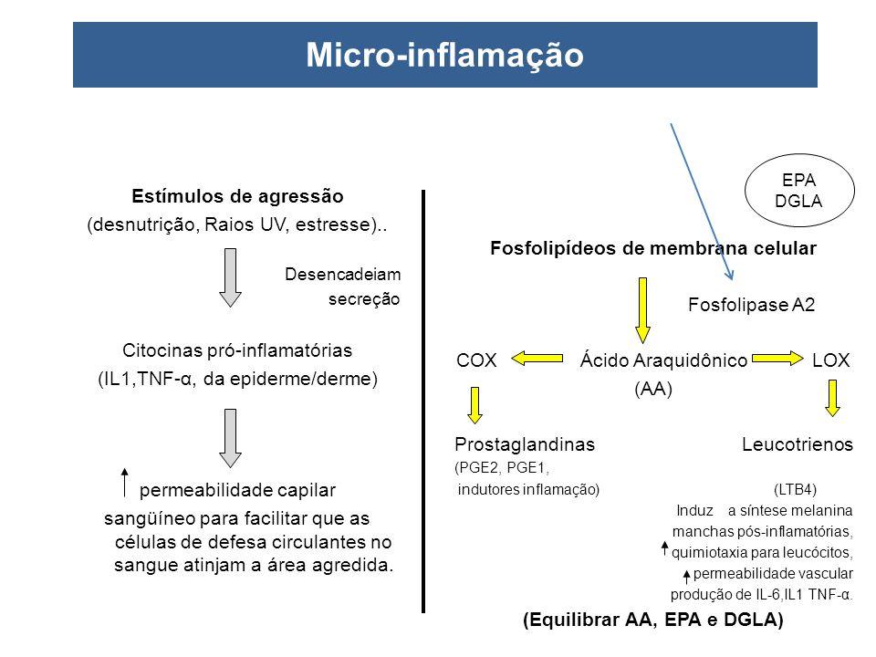 Micro-inflamação Estímulos de agressão (desnutrição, Raios UV, estresse).. Desencadeiam secreção Citocinas pró-inflamatórias (IL1,TNF-α, da epiderme/d