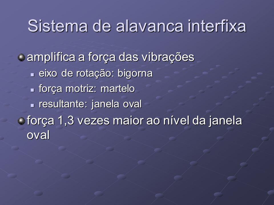 Sistema de alavanca interfixa amplifica a força das vibrações  eixo de rotação: bigorna  força motriz: martelo  resultante: janela oval força 1,3 v