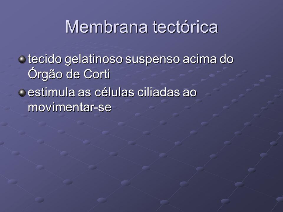 Membrana tectórica tecido gelatinoso suspenso acima do Órgão de Corti estimula as células ciliadas ao movimentar-se
