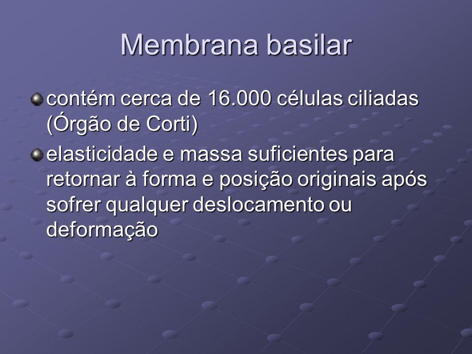 Membrana basilar contém cerca de 16.000 células ciliadas (Órgão de Corti) elasticidade e massa suficientes para retornar à forma e posição originais a