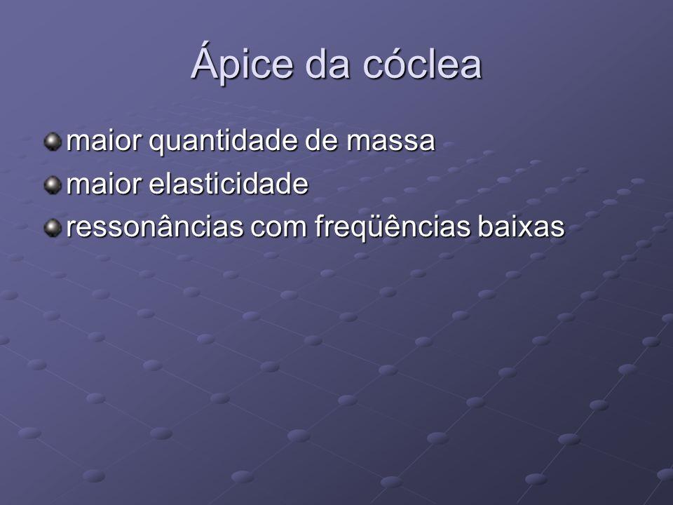 Ápice da cóclea maior quantidade de massa maior elasticidade ressonâncias com freqüências baixas