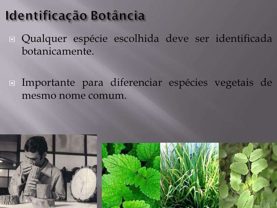  Qualquer espécie escolhida deve ser identificada botanicamente.