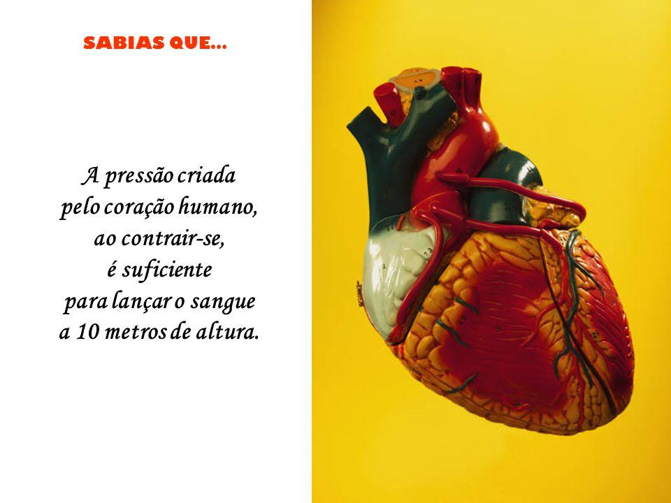 SABIAS QUE… Uma barata pode viver nove días sem cabeça, até que finalmente morre de fome.