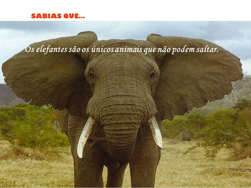 SABIAS QUE… Os elefantes são os únicos animais que não podem saltar.