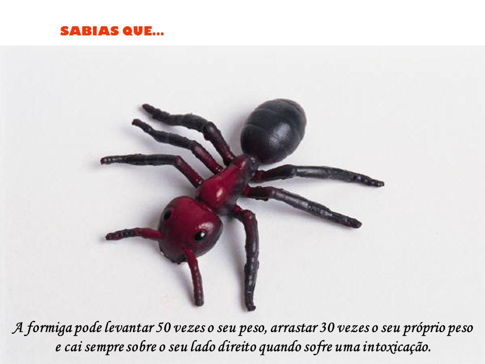 SABIAS QUE… A formiga pode levantar 50 vezes o seu peso, arrastar 30 vezes o seu próprio peso e cai sempre sobre o seu lado direito quando sofre uma intoxicação.