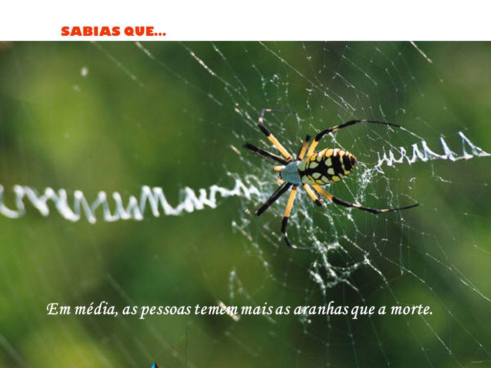 SABIAS QUE… Em média, as pessoas temem mais as aranhas que a morte.
