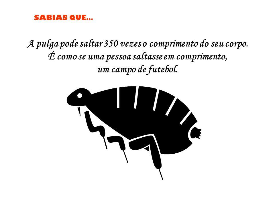 SABIAS QUE… A pulga pode saltar 350 vezes o comprimento do seu corpo.