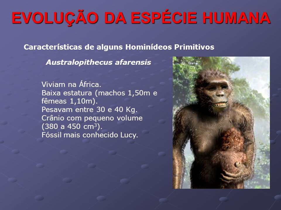 Características de alguns Hominídeos Primitivos Australopithecus afarensis Viviam na África. Baixa estatura (machos 1,50m e fêmeas 1,10m). Pesavam ent