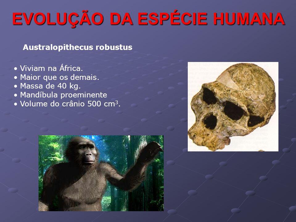 EVOLUÇÃO DA ESPÉCIE HUMANA Australopithecus robustus • Viviam na África. • Maior que os demais. • Massa de 40 kg. • Mandíbula proeminente • Volume do