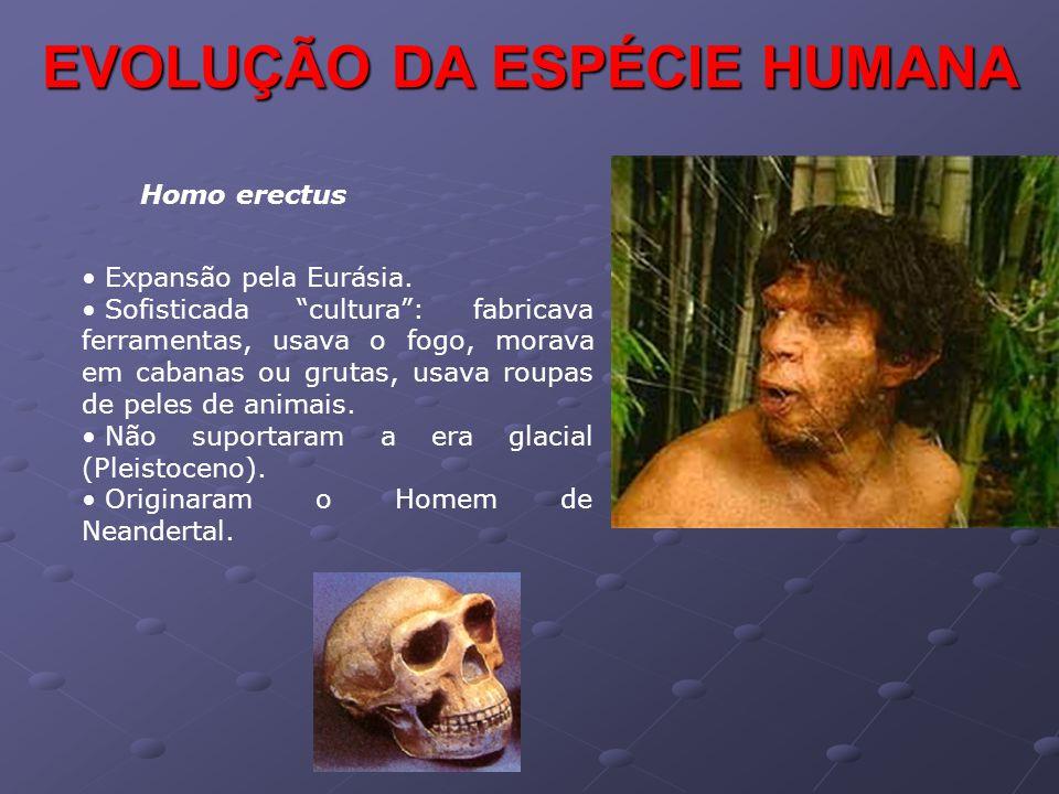 """EVOLUÇÃO DA ESPÉCIE HUMANA Homo erectus • Expansão pela Eurásia. • Sofisticada """"cultura"""": fabricava ferramentas, usava o fogo, morava em cabanas ou gr"""