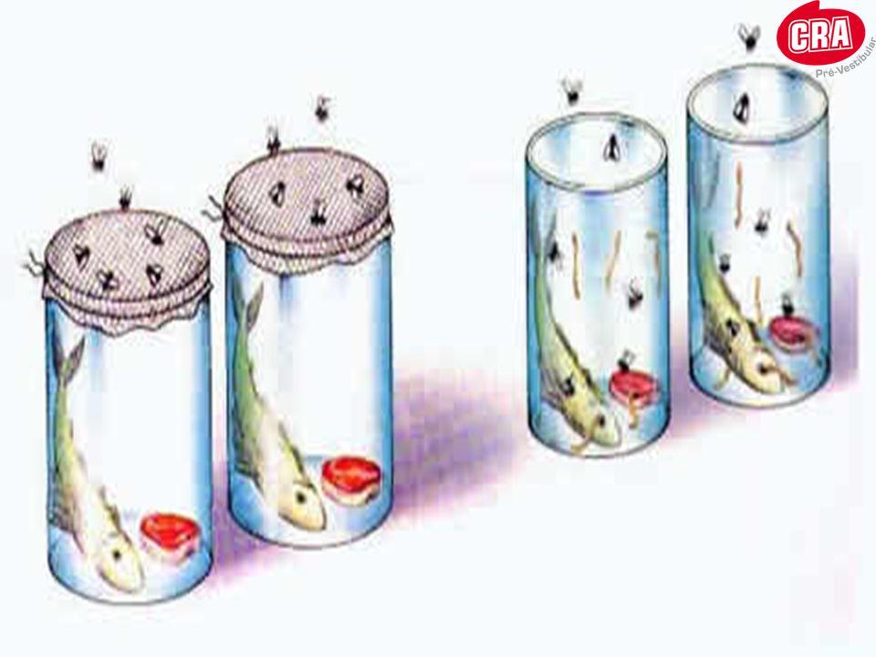 Origem da vida Meados do século XVII: descoberta dos micróbios(Antonie van Leeuwenhoek) Reanimação da hipótese da geração espontânea Os abiogenistas achavam que seres tão pequenos e simples como os micróbios não se reproduziam, surgindo por geração espontânea