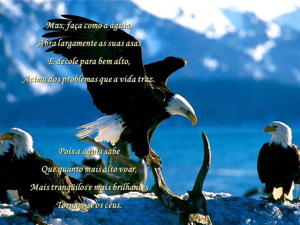 As tempestades trazem as águias para fora.. 01 Quando as tempestades da vida Surgem escuras à minha frente, me recordo de maravilhosas palavras Que um
