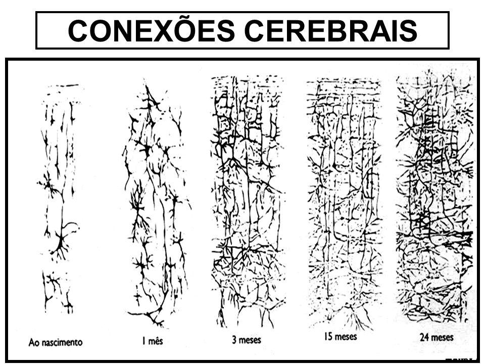 CONEXÕES CEREBRAIS