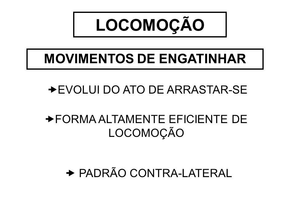 LOCOMOÇÃO MOVIMENTOS DE ENGATINHAR  EVOLUI DO ATO DE ARRASTAR-SE  FORMA ALTAMENTE EFICIENTE DE LOCOMOÇÃO  PADRÃO CONTRA-LATERAL