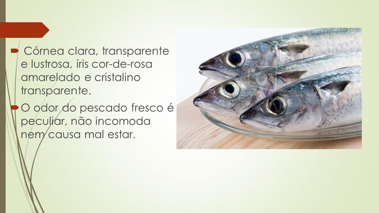  Córnea clara, transparente e lustrosa, íris cor-de-rosa amarelado e cristalino transparente.  O odor do pescado fresco é peculiar, não incomoda nem