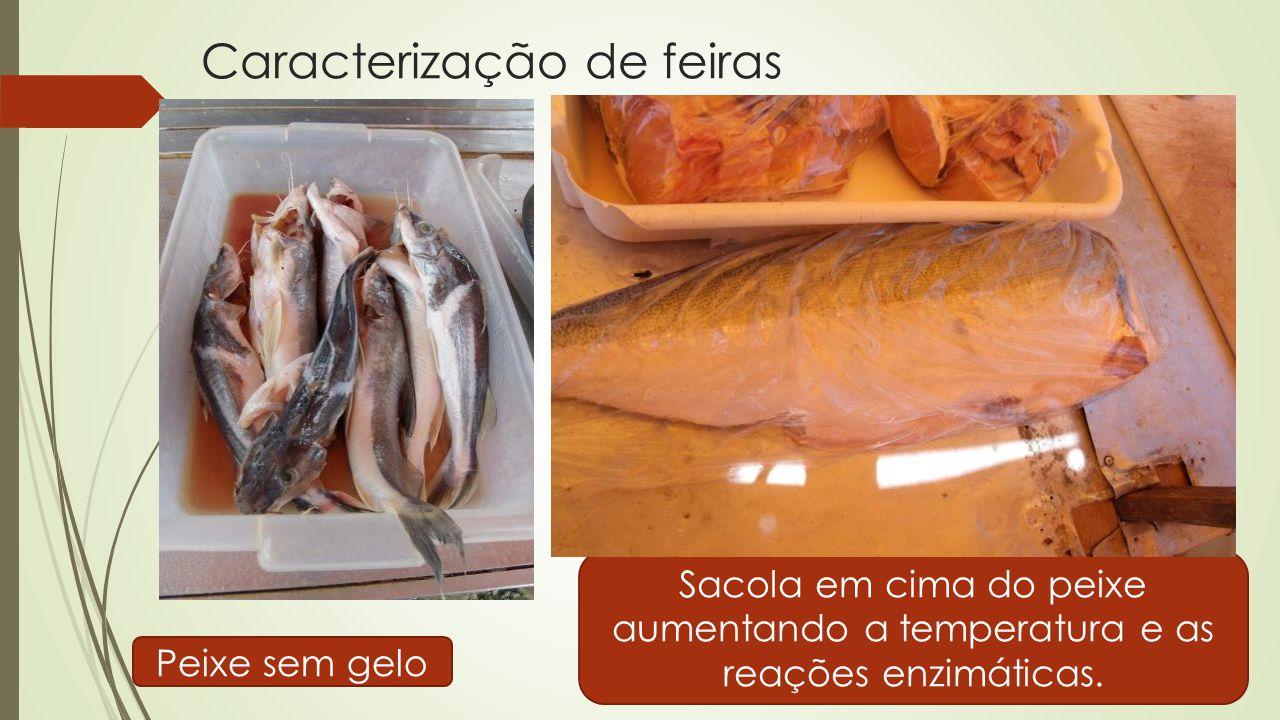 Caracterização de feiras Peixe sem gelo Sacola em cima do peixe aumentando a temperatura e as reações enzimáticas.