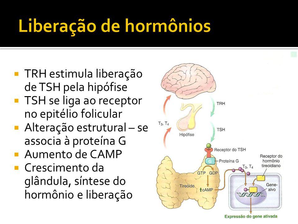  TRH estimula liberação de TSH pela hipófise  TSH se liga ao receptor no epitélio folicular  Alteração estrutural – se associa à proteína G  Aumen