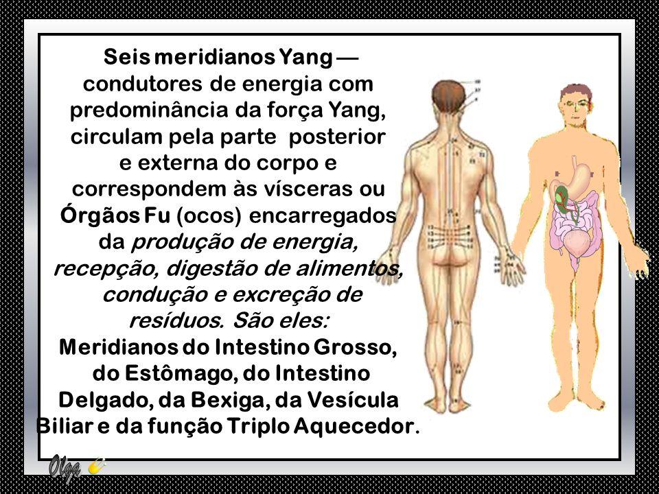 Os MERIDIANOS PRINCIPAIS são constituídos por: Seis meridianos Yin — condutores de energia com predominância da força Yin, circulam pela parte anterior e interna do corpo e correspondem aos Órgãos Zang, encarregados da depuração, redistribuição e armazenamento do Chi e das substâncias fundamentais (sangues e fluidos corpóreos).