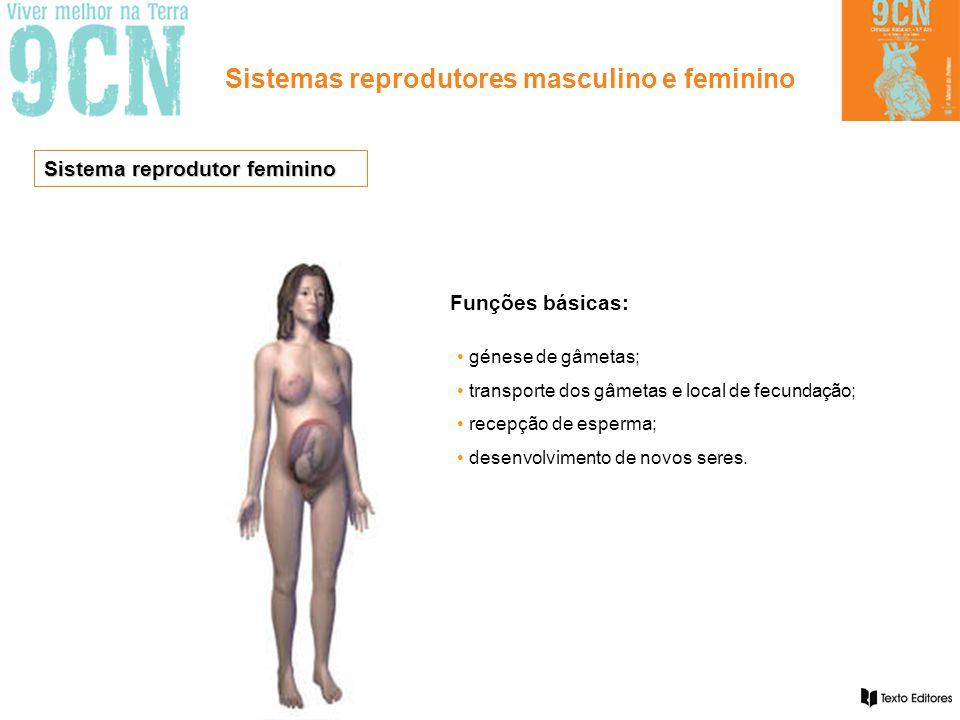 Sistemas reprodutores masculino e feminino Funções básicas: • génese de gâmetas; • transporte dos gâmetas e local de fecundação; • recepção de esperma