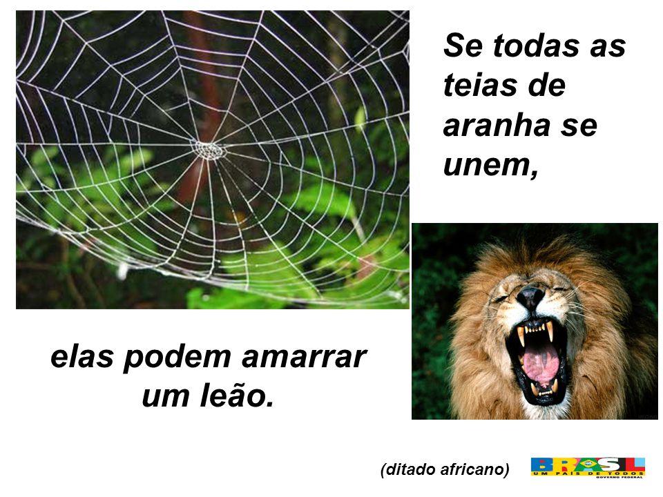 elas podem amarrar um leão. Se todas as teias de aranha se unem, (ditado africano)