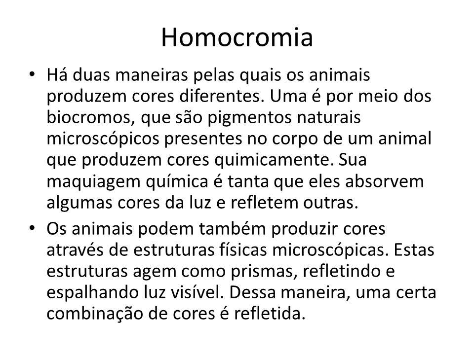 Homocromia • Há duas maneiras pelas quais os animais produzem cores diferentes. Uma é por meio dos biocromos, que são pigmentos naturais microscópicos