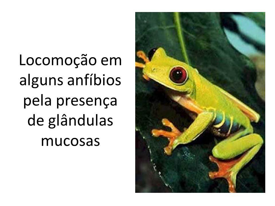 Locomoção em alguns anfíbios pela presença de glândulas mucosas