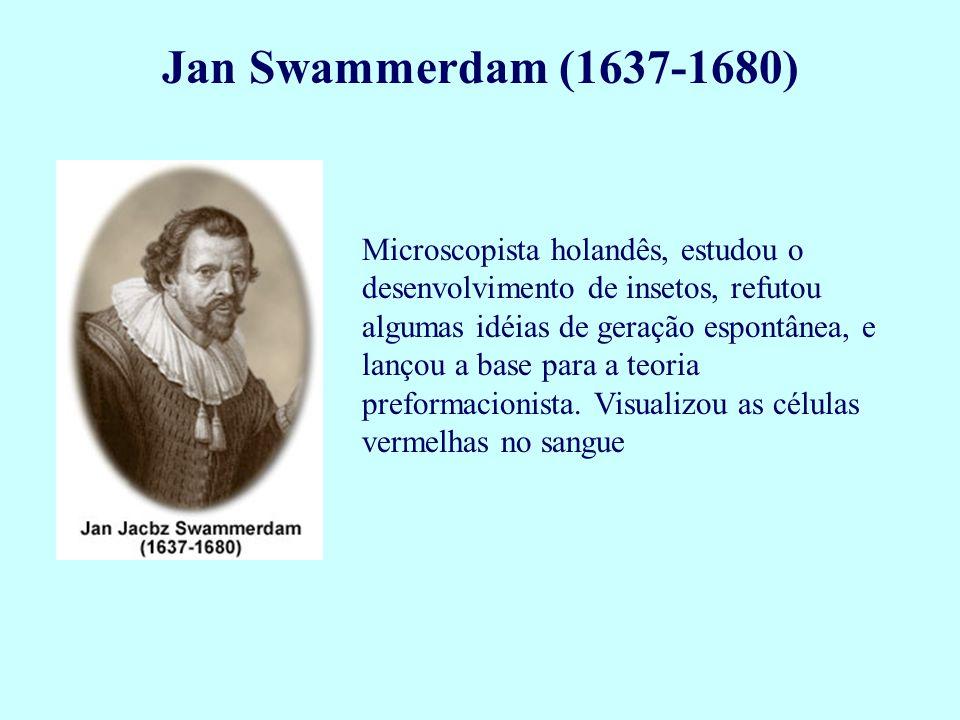 Jan Swammerdam (1637-1680) Microscopista holandês, estudou o desenvolvimento de insetos, refutou algumas idéias de geração espontânea, e lançou a base
