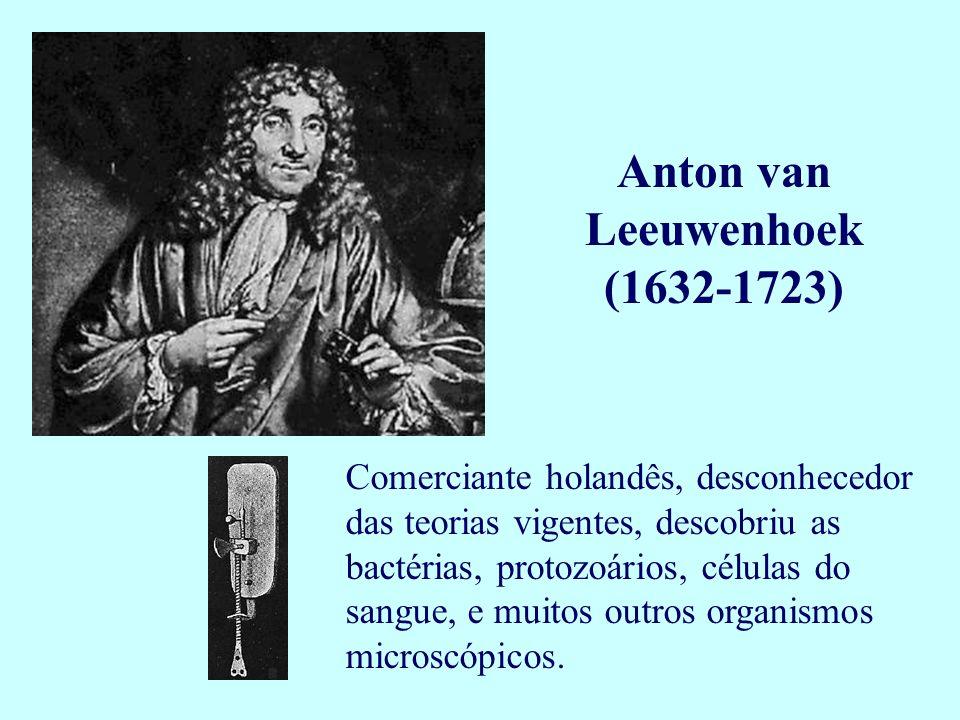 Anton van Leeuwenhoek (1632-1723) Comerciante holandês, desconhecedor das teorias vigentes, descobriu as bactérias, protozoários, células do sangue, e
