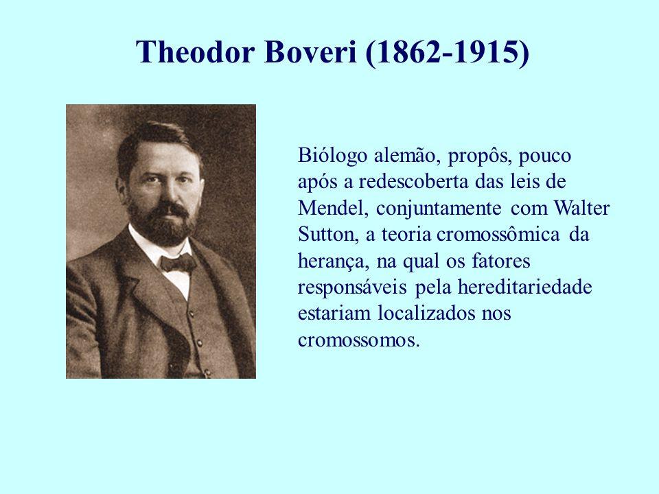Theodor Boveri (1862-1915) Biólogo alemão, propôs, pouco após a redescoberta das leis de Mendel, conjuntamente com Walter Sutton, a teoria cromossômic