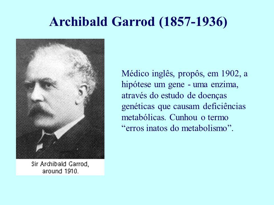 Archibald Garrod (1857-1936) Médico inglês, propôs, em 1902, a hipótese um gene - uma enzima, através do estudo de doenças genéticas que causam defici