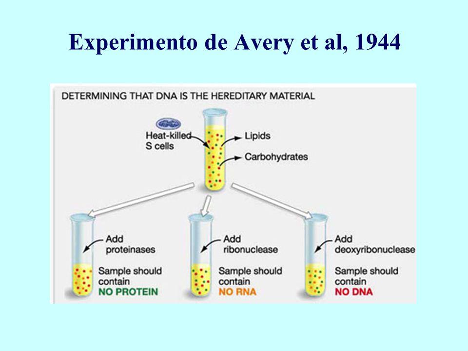 Experimento de Avery et al, 1944