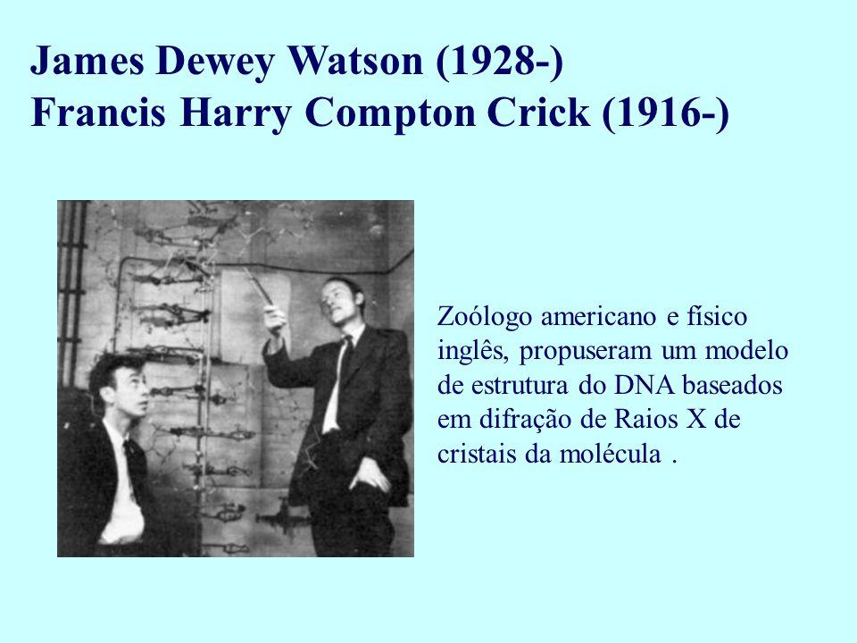 James Dewey Watson (1928-) Francis Harry Compton Crick (1916-) Zoólogo americano e físico inglês, propuseram um modelo de estrutura do DNA baseados em