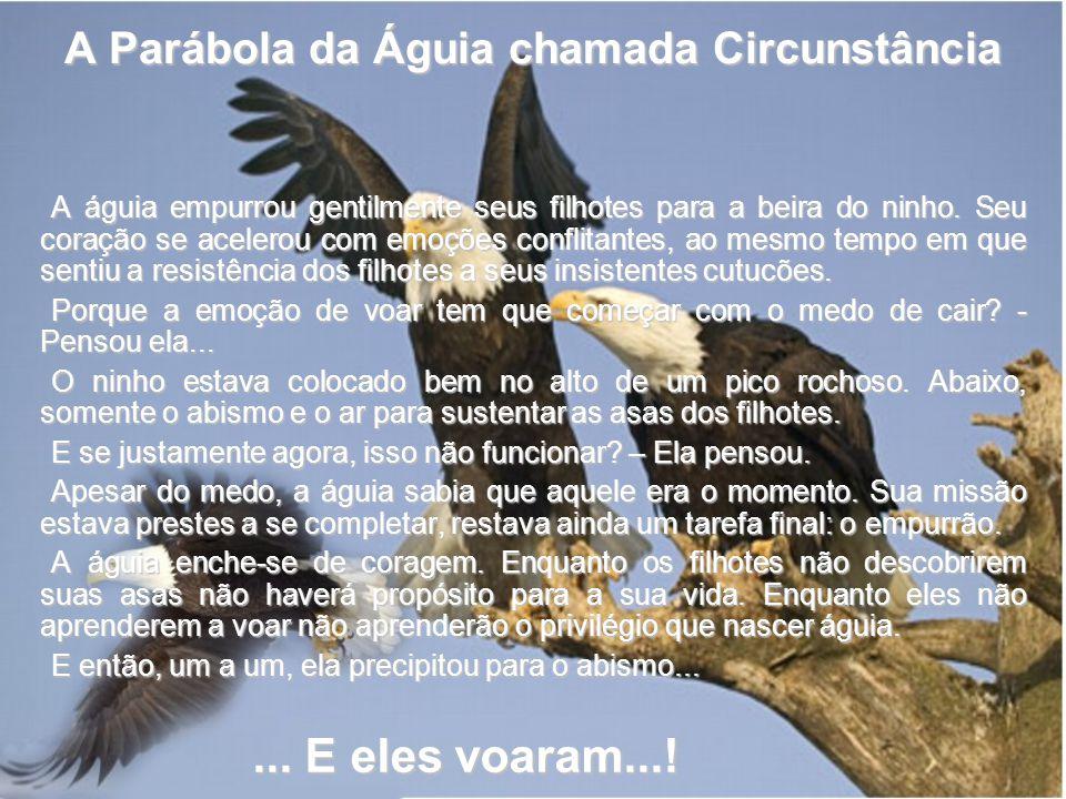 A Parábola da Águia chamada Circunstância A águia empurrou gentilmente seus filhotes para a beira do ninho. Seu coração se acelerou com emoções confli