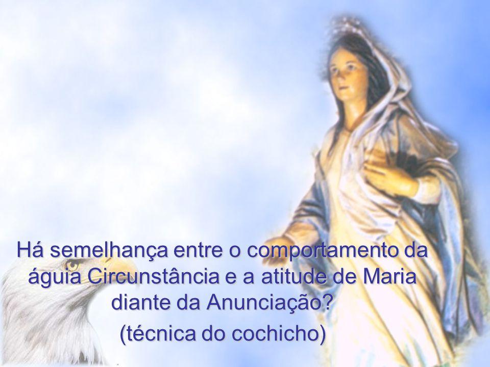 Há semelhança entre o comportamento da águia Circunstância e a atitude de Maria diante da Anunciação? (técnica do cochicho)