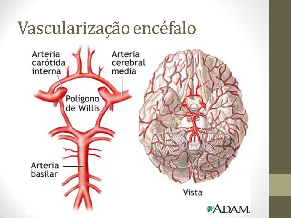 Vascularização encéfalo