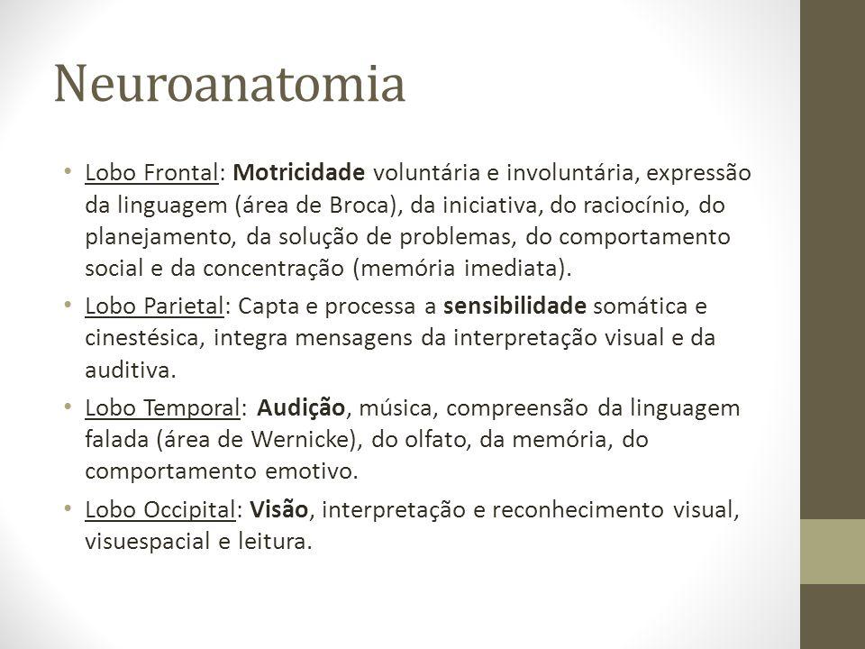 Neuroanatomia • Lobo Frontal: Motricidade voluntária e involuntária, expressão da linguagem (área de Broca), da iniciativa, do raciocínio, do planejamento, da solução de problemas, do comportamento social e da concentração (memória imediata).