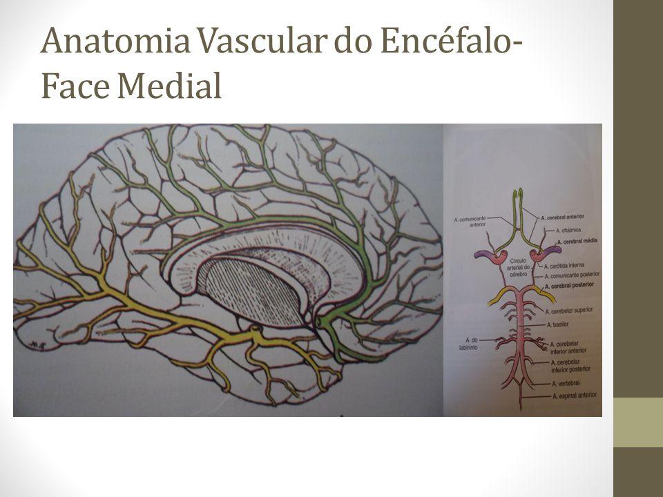 Anatomia Vascular do Encéfalo- Face Medial