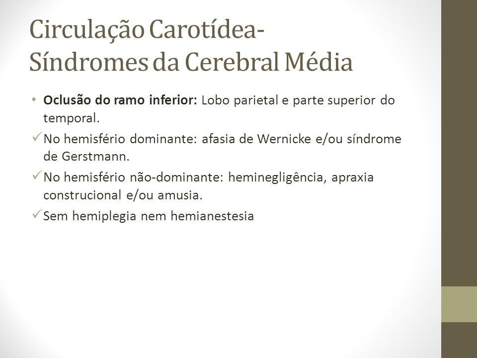 Circulação Carotídea- Síndromes da Cerebral Média • Oclusão do ramo inferior: Lobo parietal e parte superior do temporal.  No hemisfério dominante: a