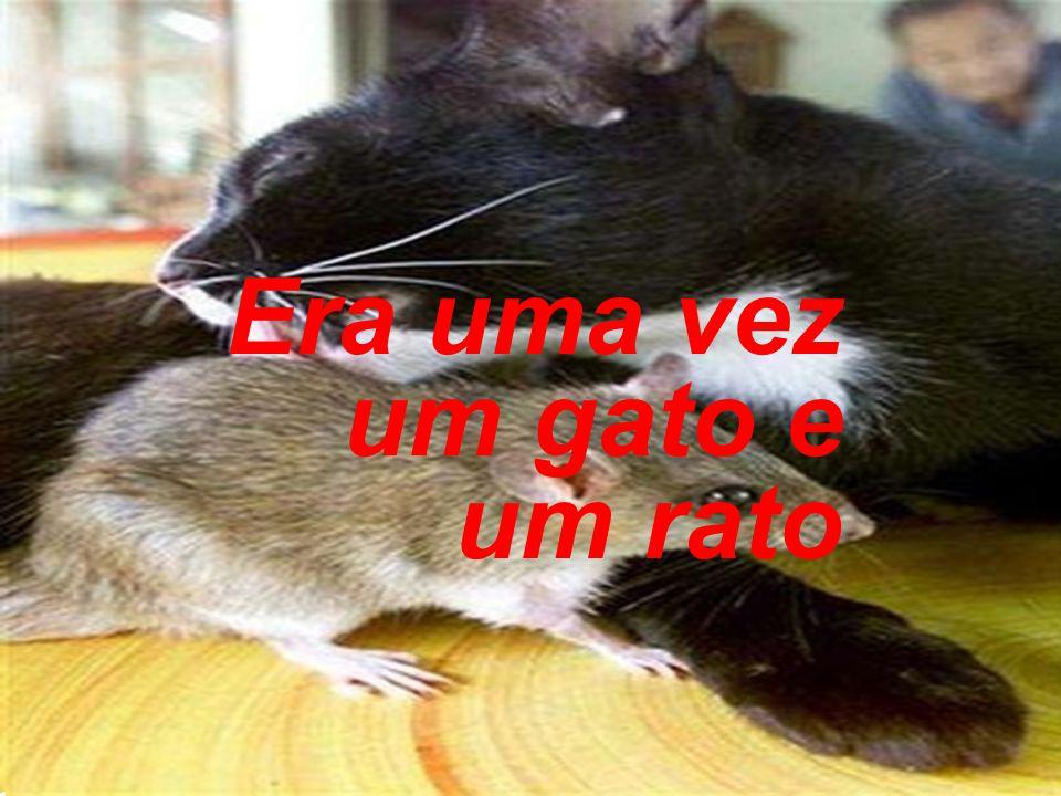 O rato entrou no rio e se afastou e desapareceu.