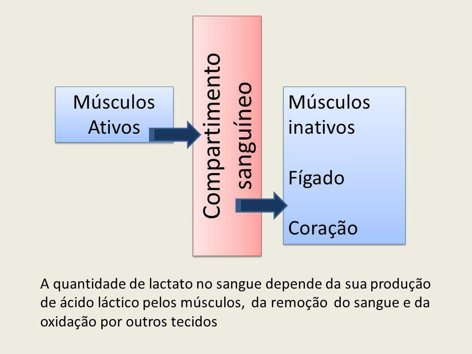 Músculos Ativos Músculos inativos Fígado Coração Músculos inativos Fígado Coração Compartimento sanguíneo A quantidade de lactato no sangue depende da