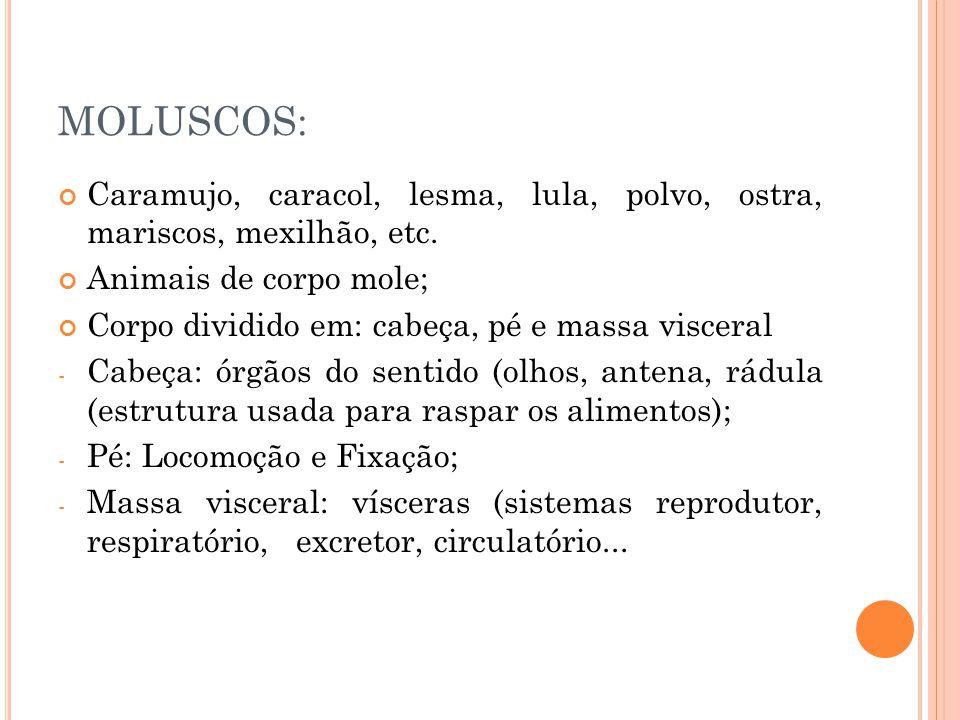 MOLUSCOS: Caramujo, caracol, lesma, lula, polvo, ostra, mariscos, mexilhão, etc. Animais de corpo mole; Corpo dividido em: cabeça, pé e massa visceral