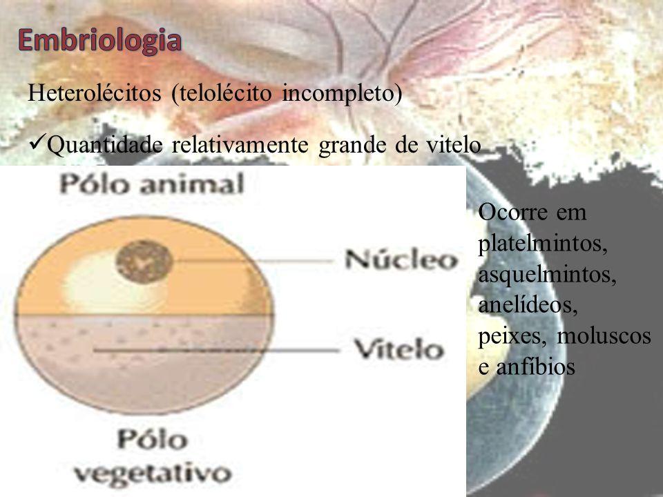 Agora responda Por que animais tão distantes de escala evolutiva como poríferos e mamíferos apresentam o mesmo tipo de ovo?