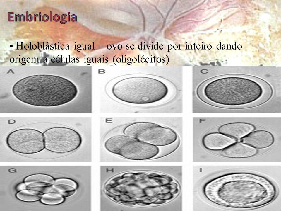 Clivagem (segmentação)  Depende diretamente da quantidade de vitelo Clivagem  Processo de divisões mitóticas sucessivas até a fase de mórula (64 cél