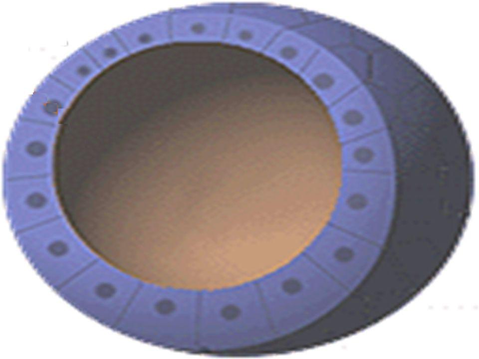  Blastômeros se dirigem para a periferia Blástula  Formam uma cavidade cheia de líquido a blastocele  Nos mamíferos ocorre a formação do blastocist