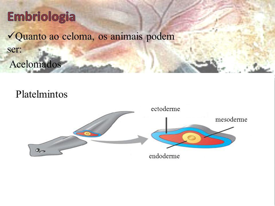 Celoma  Cavidade revestida internamente e externamente pela mesoderme  Nos mamíferos aloja os pulmões, o coração e as vísceras